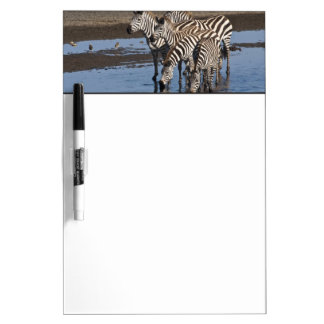 Africa. Tanzania. Zebras drinking at Ndutu in Dry-Erase Board