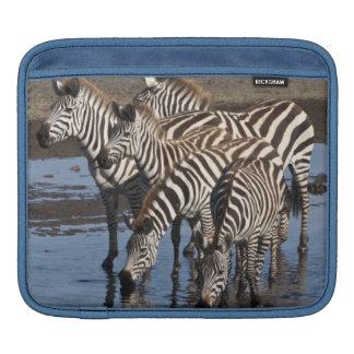 Africa. Tanzania. Zebras drinking at Ndutu in iPad Sleeves