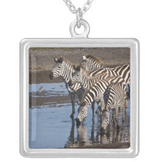 Africa. Tanzania. Zebras drinking at Ndutu in Silver Plated Necklace