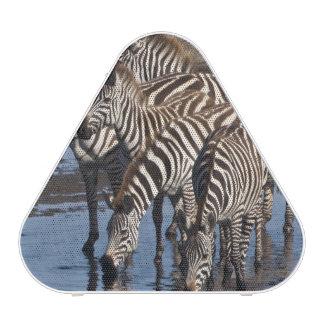 Africa. Tanzania. Zebras drinking at Ndutu in Speaker