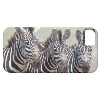 Africa, Tanzania, zebras iPhone SE/5/5s Case
