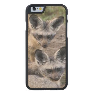 África. Tanzania. Zorros Palo-Espigados en Ndutu Funda De iPhone 6 Carved® Slim De Arce