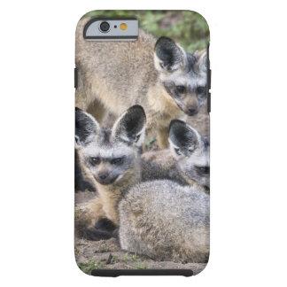 África. Tanzania. Zorros Palo-Espigados en Ndutu Funda Para iPhone 6 Tough