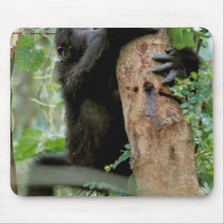 Africa, Uganda, Bwindi Impenetrable Forest Mouse Pad