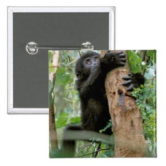 Africa, Uganda, Bwindi Impenetrable Forest Pinback Button