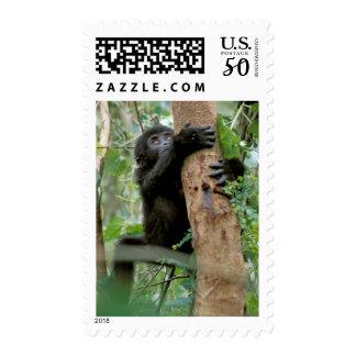 Africa, Uganda, Bwindi Impenetrable Forest Postage