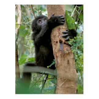 Africa Uganda Bwindi Impenetrable Forest Postcards
