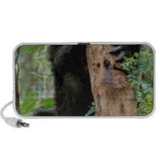 Africa, Uganda, Bwindi Impenetrable Forest iPod Speaker