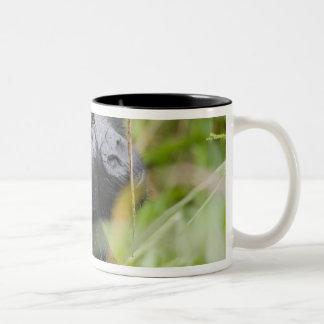 Africa, Uganda, Bwindi Impenetrable National 2 Coffee Mugs