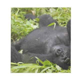 Africa, Uganda, Bwindi Impenetrable National 3 Memo Note Pads