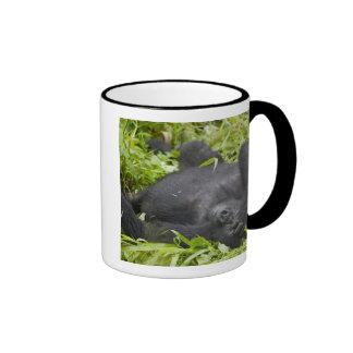 Africa, Uganda, Bwindi Impenetrable National 3 Mugs