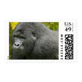 Africa, Uganda, Bwindi Impenetrable National 4 Postage Stamps
