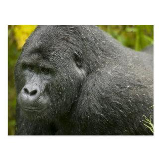 Africa Uganda Bwindi Impenetrable National 4 Postcards