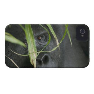 Africa, Uganda, Bwindi Impenetrable National 6 iPhone 4 Case-Mate Cases