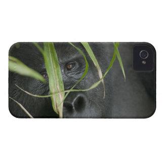 Africa, Uganda, Bwindi Impenetrable National 6 iPhone 4 Case