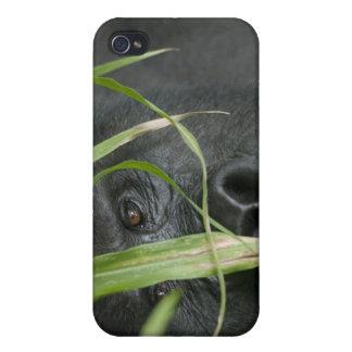 Africa, Uganda, Bwindi Impenetrable National 6 Cover For iPhone 4