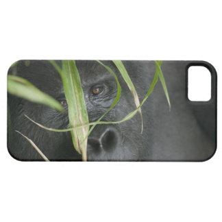 Africa, Uganda, Bwindi Impenetrable National 6 iPhone SE/5/5s Case