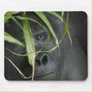Africa, Uganda, Bwindi Impenetrable National 6 Mouse Pad