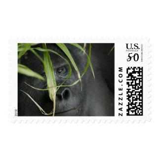 Africa, Uganda, Bwindi Impenetrable National 6 Postage