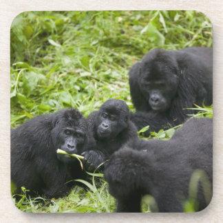 Africa, Uganda, Bwindi Impenetrable National 7 Beverage Coaster