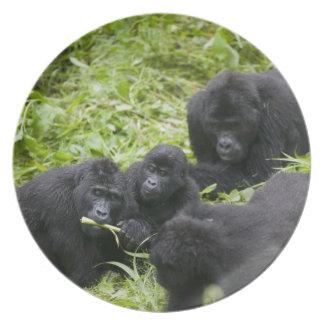 Africa, Uganda, Bwindi Impenetrable National 7 Plate