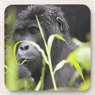 Africa, Uganda, Bwindi Impenetrable National Coaster