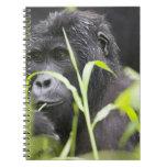Africa, Uganda, Bwindi Impenetrable National Notebook