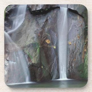 Africa, Uganda, Bwindi Impenetrable rainforest, Beverage Coasters