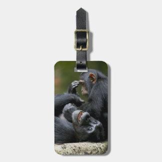 Africa, Uganda, Kibale Forest Reserve, Juvenile 2 Bag Tag