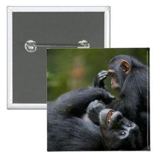 Africa, Uganda, Kibale Forest Reserve, Juvenile 2 Button