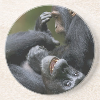 Africa, Uganda, Kibale Forest Reserve, Juvenile 2 Drink Coasters