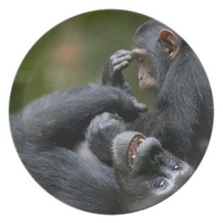 Africa, Uganda, Kibale Forest Reserve, Juvenile 2 Dinner Plate