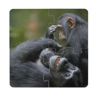 Africa, Uganda, Kibale Forest Reserve, Juvenile 2 Puzzle Coaster