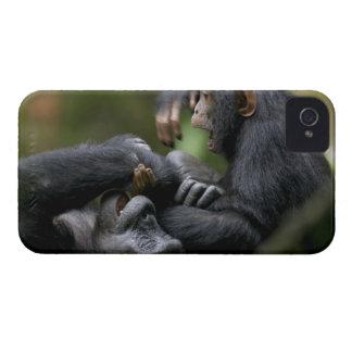 Africa, Uganda, Kibale Forest Reserve, Juvenile iPhone 4 Case-Mate Case
