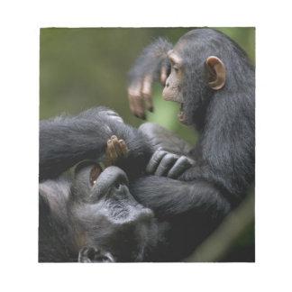 Africa, Uganda, Kibale Forest Reserve, Juvenile Notepad