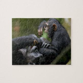 Africa, Uganda, Kibale Forest Reserve, Juvenile Jigsaw Puzzles