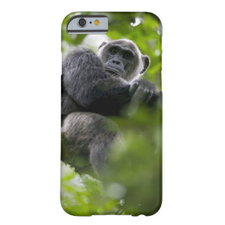 Africa, Uganda, Kibale Forest Reserve, Portrait 2 Barely There iPhone 6 Case
