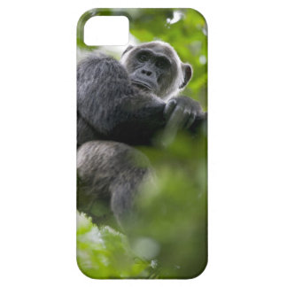Africa, Uganda, Kibale Forest Reserve, Portrait 2 iPhone SE/5/5s Case