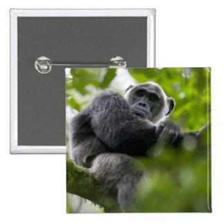 Africa, Uganda, Kibale Forest Reserve, Portrait 2 Pinback Button