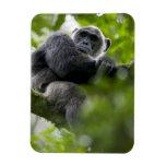 Africa, Uganda, Kibale Forest Reserve, Portrait 2 Flexible Magnet