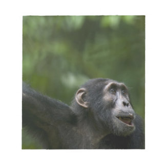 Africa, Uganda, Kibale Forest Reserve, Portrait Notepad