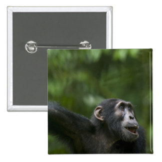 Africa, Uganda, Kibale Forest Reserve, Portrait Pinback Button
