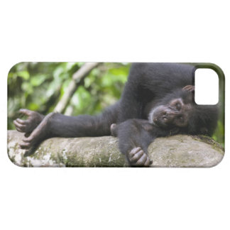 Africa, Uganda, Kibale Forest Reserve, Young iPhone SE/5/5s Case