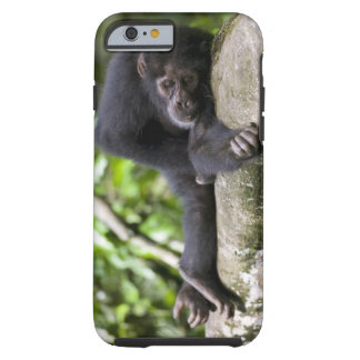 Africa, Uganda, Kibale Forest Reserve, Young Tough iPhone 6 Case