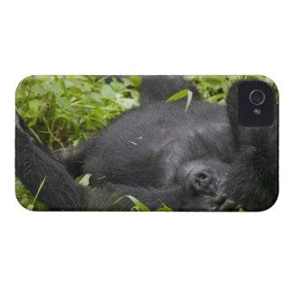 África, Uganda, nacional impenetrable 3 de Bwindi iPhone 4 Cárcasas