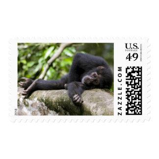 África, Uganda, reserva del bosque de Kibale, Sellos Postales