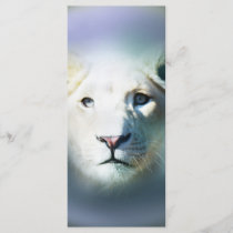 Africa White Lion Blue Eyes
