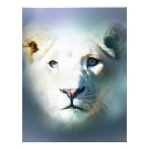 Africa White Lion Blue Eyes Flyer