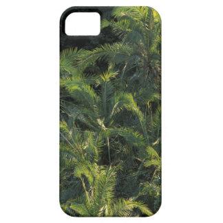 Africa, Zambia, Mosi-Oa-Tunya National Park, iPhone SE/5/5s Case