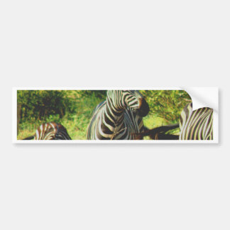 africa zebras enjoy peace, fresh and green bumper sticker